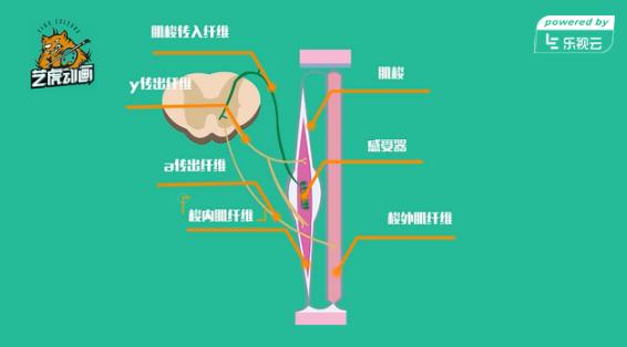 医学教学动画flash视频